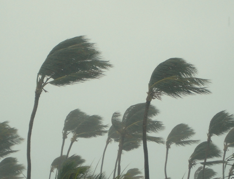 Hurricane Palm Trees 2